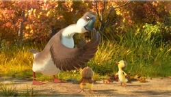 Duck Duck Goose picture