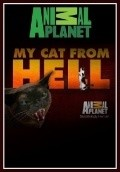 My Cat from Hell - wallpapers.