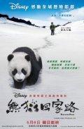 Xiong mao hui jia lu pictures.