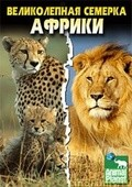Africa's Super Seven pictures.