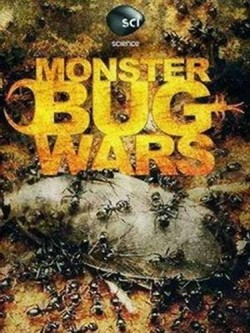 Monster Bug Wars! - wallpapers.