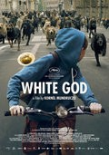 Fehér isten pictures.