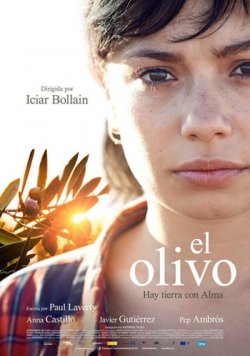 El olivo pictures.