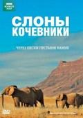 Elephant Nomads of the Namib Desert - wallpapers.