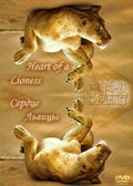 Heart of a Lioness pictures.