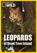 Leopards of Dead Tree Island pictures.