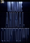 Ultimate Animal: flocks - wallpapers.